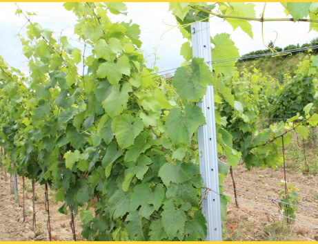 Stĺpik vinohrad. koncový HRON / 60x40x2,00x2700 SH / S250GD+Z275 / ZN